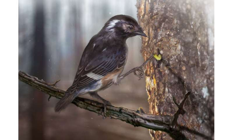Bird with unusually long toes found fossilized in amber