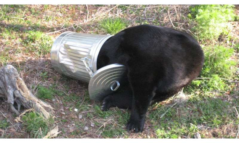 Black bears adapt to life near humans by burning the midnight oil