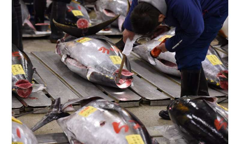 Bluefin tuna is usually found in the western and eastern Atlantic Ocean and the Mediterranean Sea