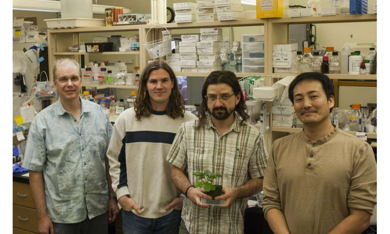 Blueprint for plant immune response found