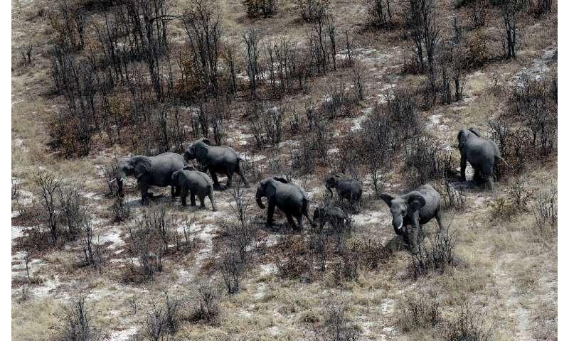 Botswana says lifting the ban will not threaten the elephant population