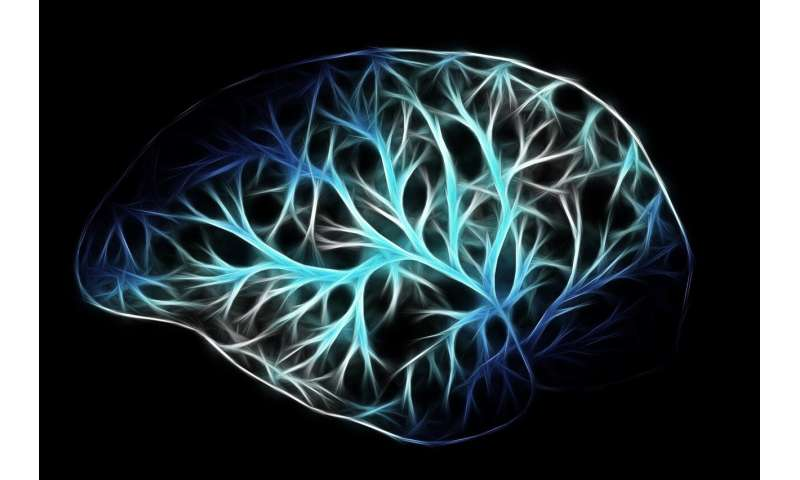 Scientists identify brain cells that drive wakefulness and resist general anesthetics thumbnail