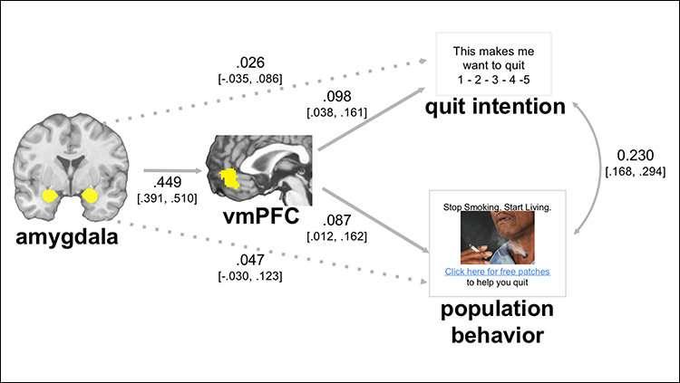 Brain imaging predicts response to public health campaign