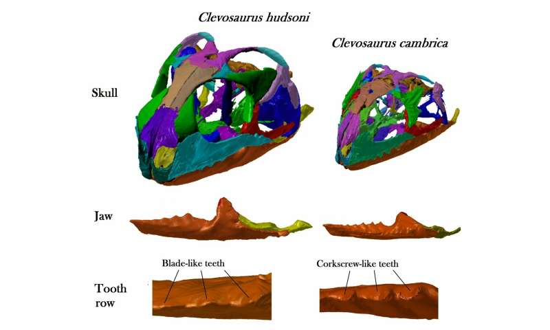Bristol undergraduate reconstructs the skulls of two species of ancient reptile