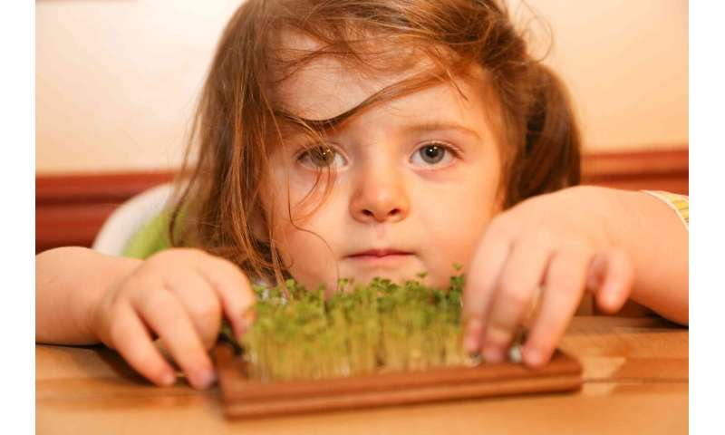 Chemical In Broccoli Sprouts May Treat >> Broccoli Sprout Compound May Restore Brain Chemistry