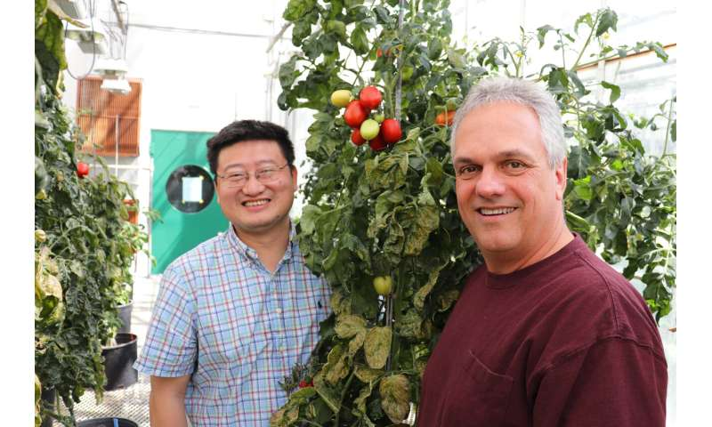 BTI scientists create new genomic resource for improving tomatoes