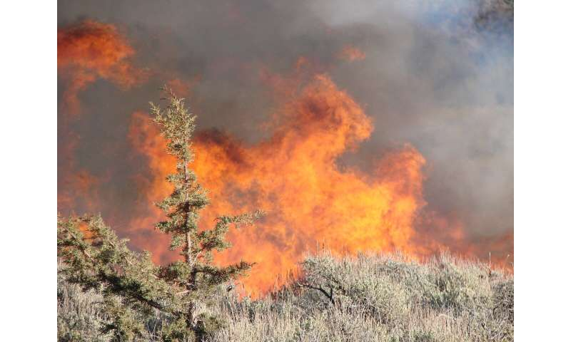 Burning invasive western juniper maintains sagebrush dominance longer