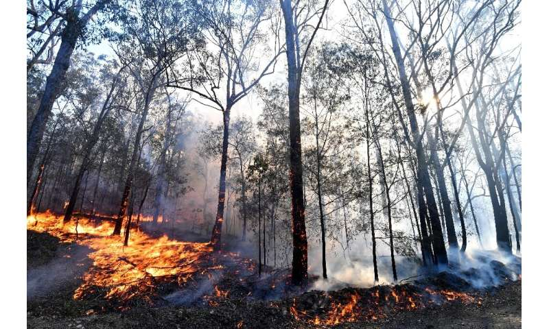 Bushfires blazing in the area have destroyed thousands of hectares over the past week, including a densely-populated habitat of