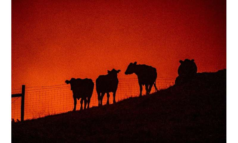 California's fires have been fueled by years of drought and dry vegetation