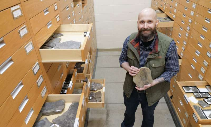 Canadian tundra formerly covered in rich forest, ancient plant fossil record shows