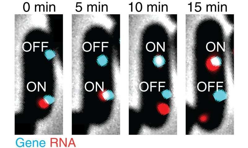 Capturing extreme close-ups of cellular gene expression