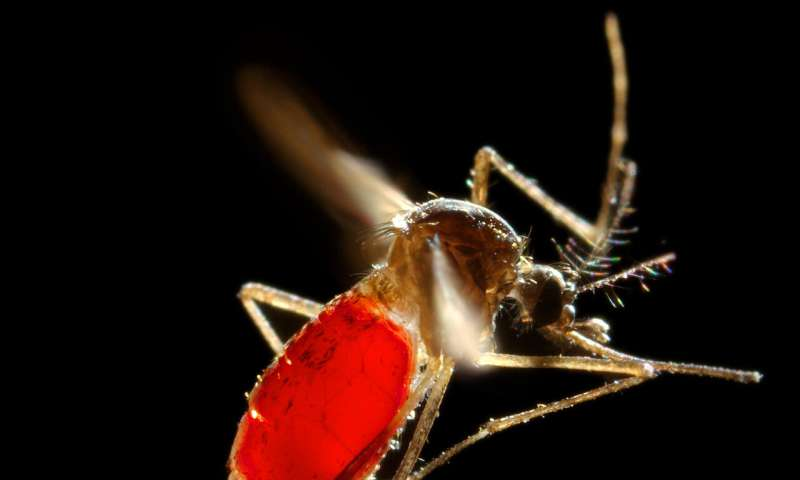 Capturing mosquito waste could speed up virus detection