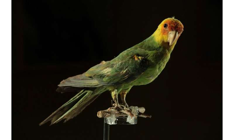 Carolina parakeet extinction was driven by human causes, DNA sequencing reveals
