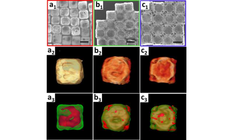 "Carrying and Releasing Nanoscale Cargo with ""Nanowrappers"""