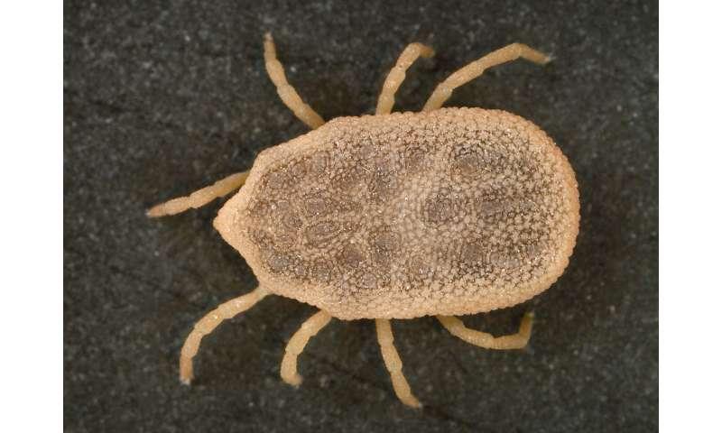 Case of tick-borne relapsing fever in Mexico