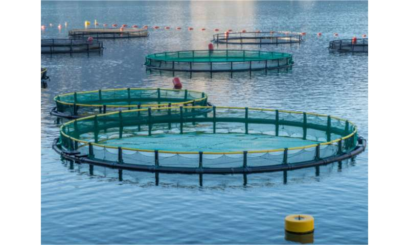Catching up with DIVERSIFY: fizzing with ideas for aquaculture