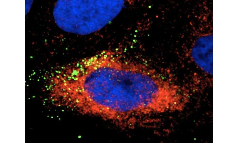Cellular protein a target for Zika control