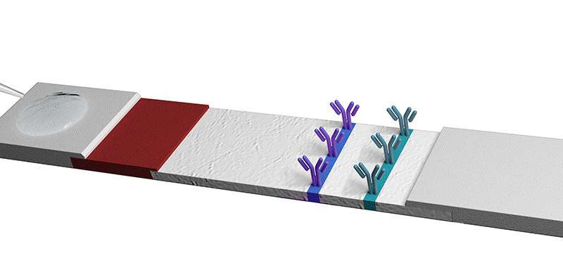 Cellulose nanofibers to improve the sensitivity of lateral flow tests
