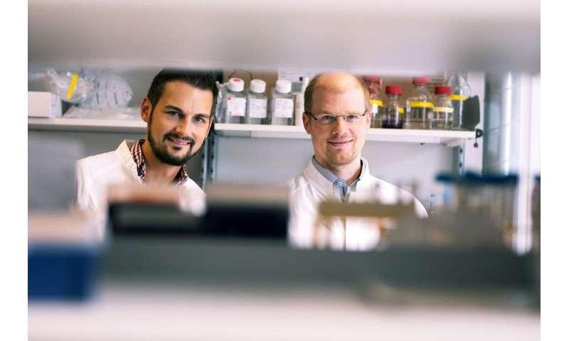 CeMM PR -- Immunity -- Master regulator of liver metabolism identified during infection