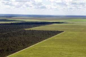 Cerrado loses an area the size of London every three months