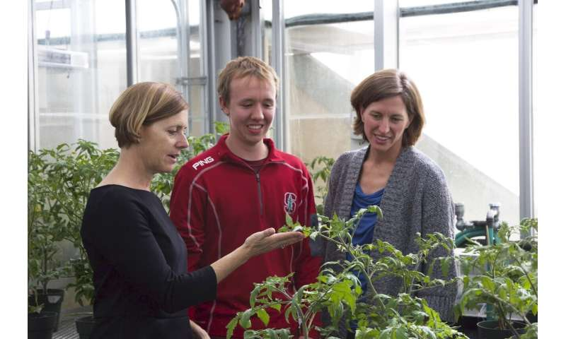 Chemical 'vaccine' helps plants repel pathogens
