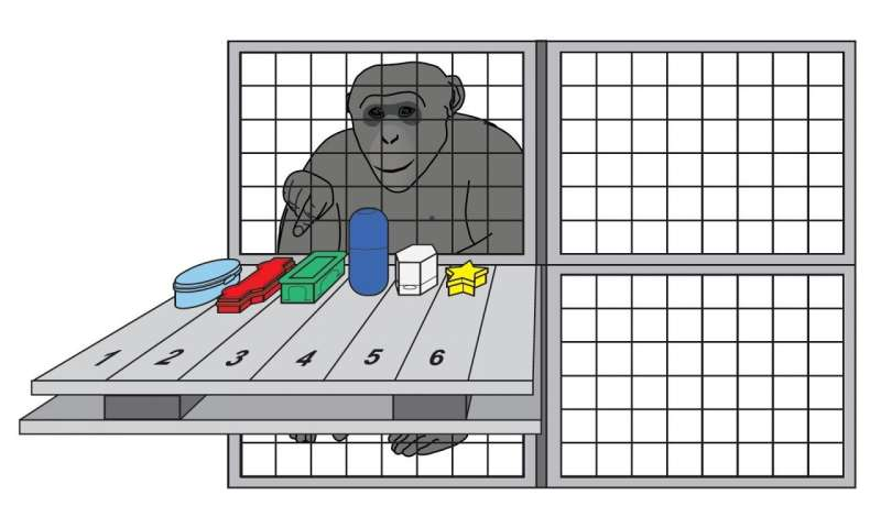 Chimpanzees' working memory similar to ours