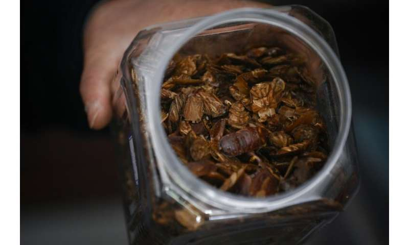 Chinese cockroach farmer Li Bingcai recently sold one tonne of the dried insects to a pharmaceutical factory for nearly 90,000 y