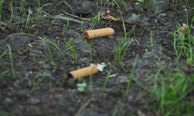 Cigarette butts are the forgotten plastic pollution – and they could be killing our plants