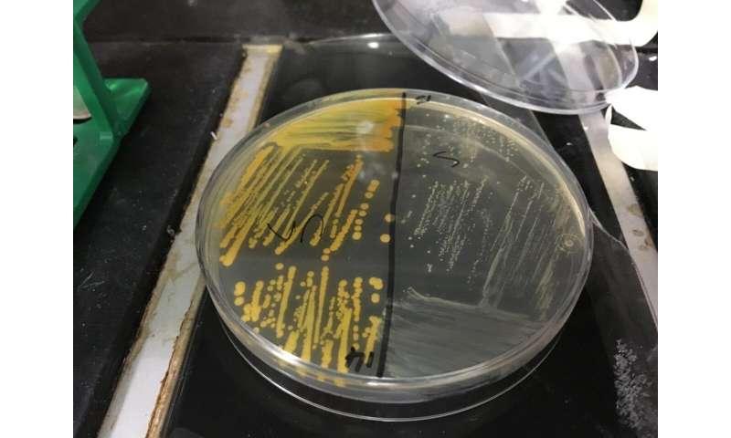 Cigarette smoke makes MRSA superbug bacterium more drug-resistant