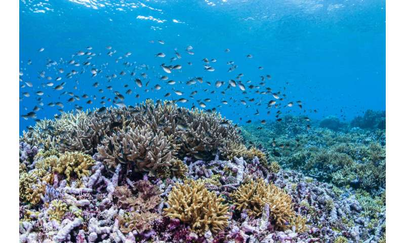 Classic energy theory fails to explain coral distribution across depth