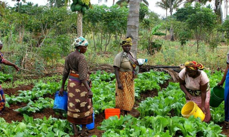 Climate pioneers: how small farmers could be leading the way towards sustainable agriculture