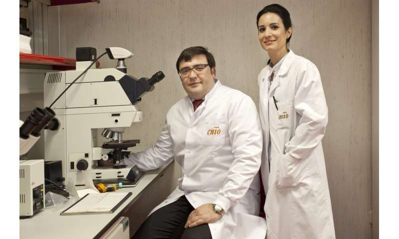 CNIO researchers confirm links between aggressive prostate cancer and hereditary breast cancer
