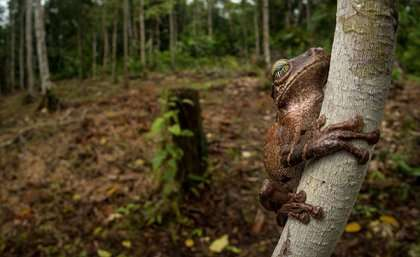 Coca and conflict: the factors fuelling Colombian deforestation