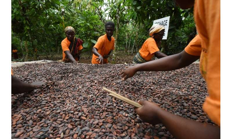 Cocoa accounts for 40 percent of the Ivory Coast's exports but the country only earns about eight percent of total profits in th