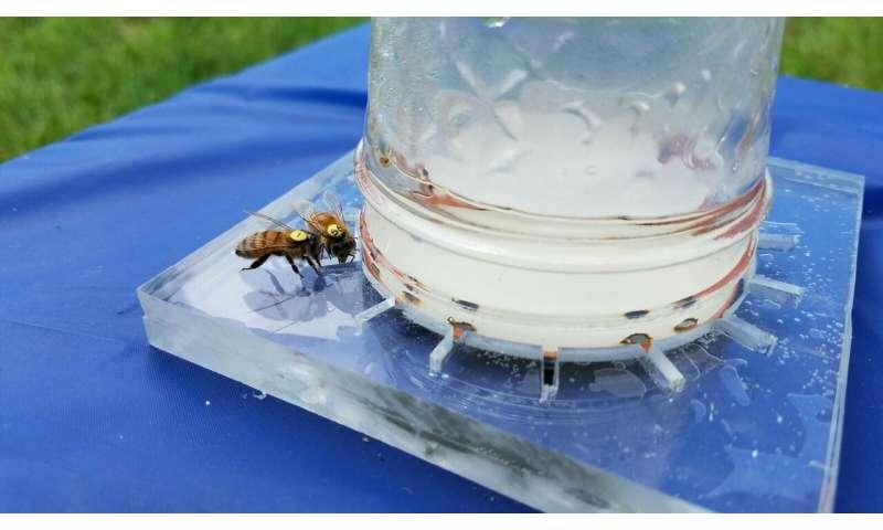 Codifying the universal language of honey bees