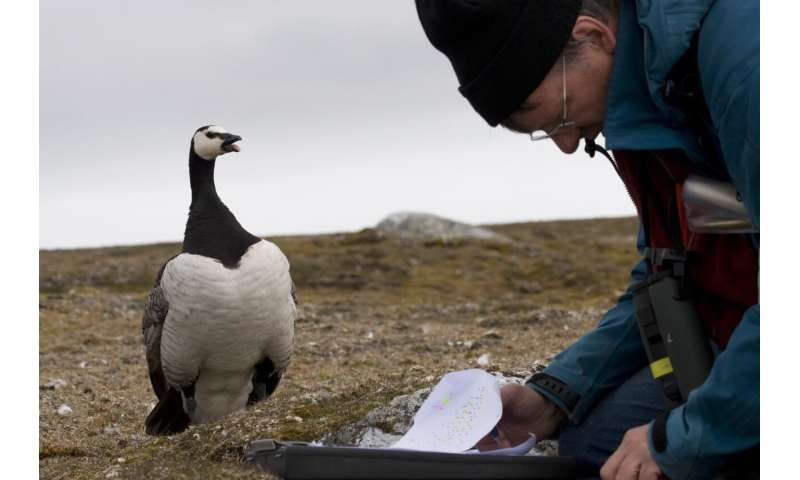 Conflicting consequences of climate change for Arctic nesting geese