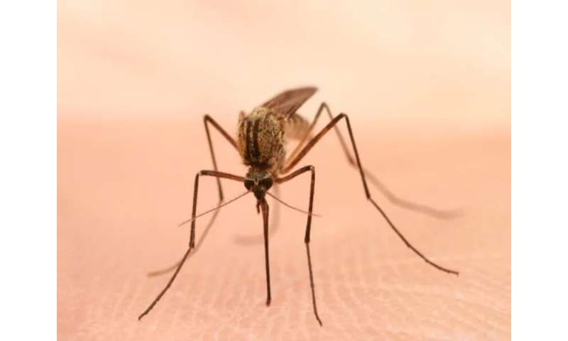 Connecticut sees first death this year from mosquito-borne EEE