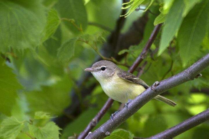 Conservation efforts help some rare birds more than others, study finds