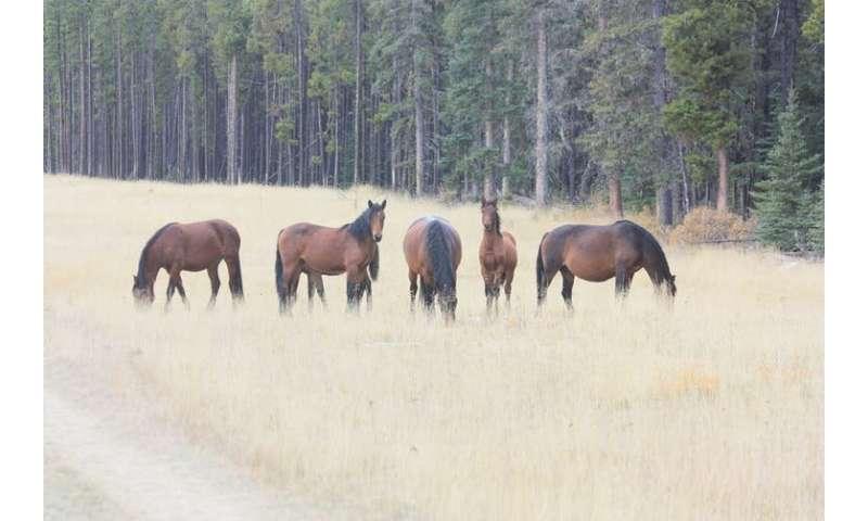 Controlling free-roaming horses in Alberta