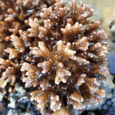 Coral host responses to heat and sediment stress