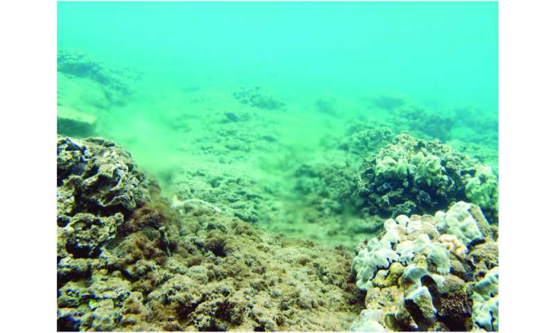 Coral study traces excess nitrogen to Maui wastewater treatment facility