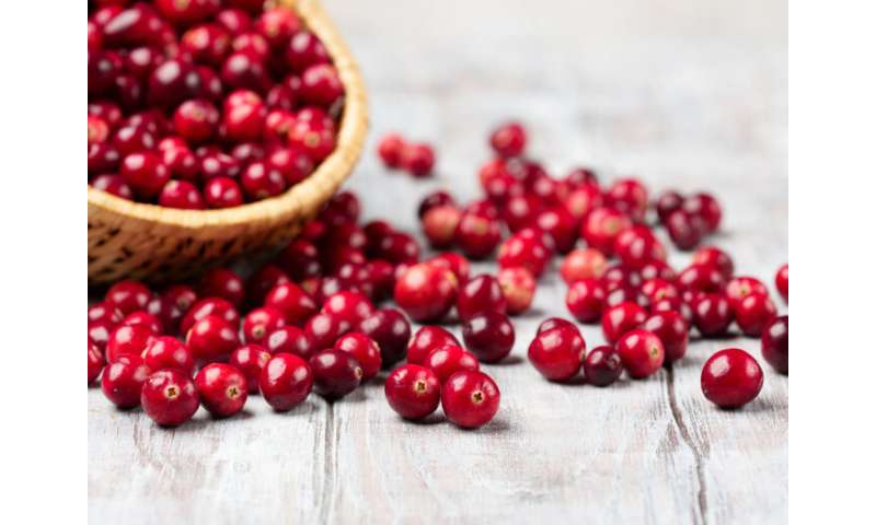 Cranberries may reduce gut health problems for meat eaters