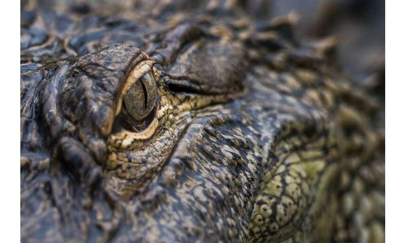 Crocs' climate clock: Ancient distribution of Crocs could reveal more about past climates