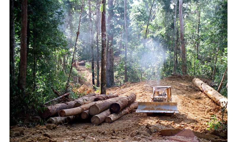 Degraded soils mean tropical forests may never fully recover from logging