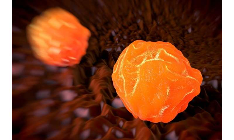 Delivery of healthy donor cells key to correcting bone disorder, UConn researchers find