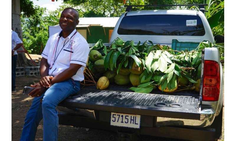 Delroy Luke, of Jamaica's Rural Agricultural Development Authority (RADA), in Enfield, St Mary, with locally-grown coconuts, as