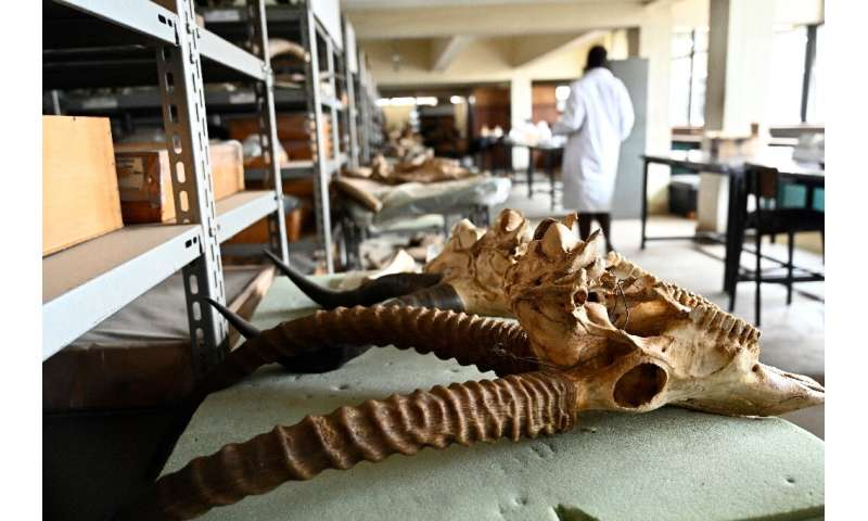 Despite its wealth of fossils, the Nairobi National Museum lacks specialists and resources. Staff say Kenya does not offer cours