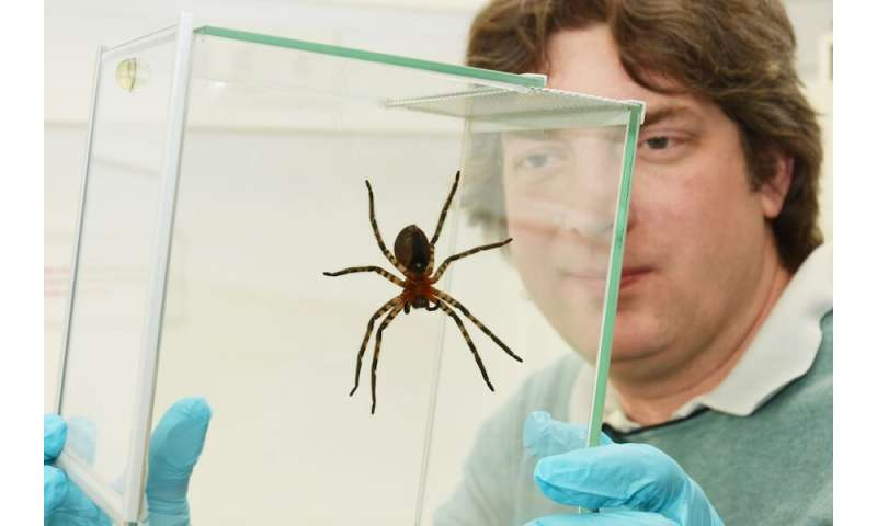 DESYs X-ray source PETRA III reveals details of adhesive structures of spider legs