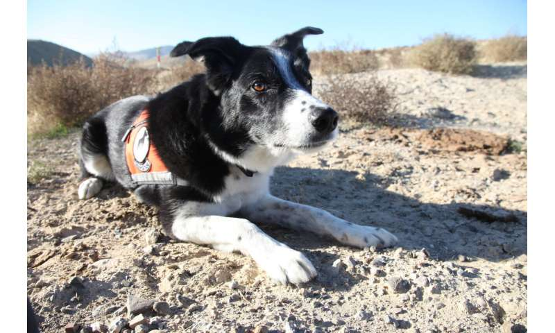 Detection dogs and DNA on the trail of endangered lizards