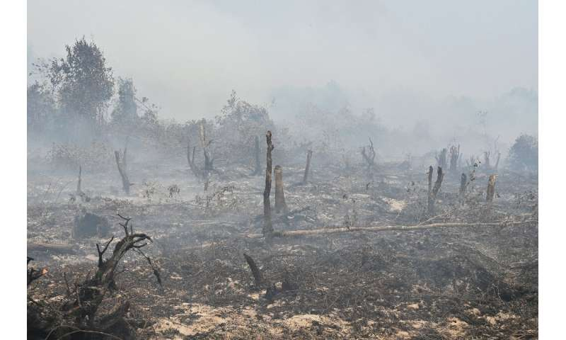 Devastating forest fires razed 942,000 hectares (2.3 million acres) of land, mostly on Sumatra and Borneo islands this year